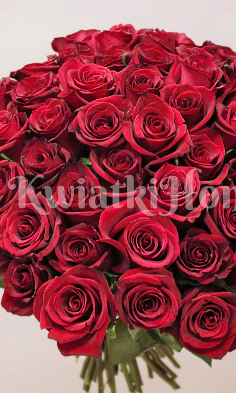 bukiet okolicznościowy 50 róż różowych saute