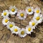 Kwiaty na zamówienie. Jak wybrać kwiaciarnie online?