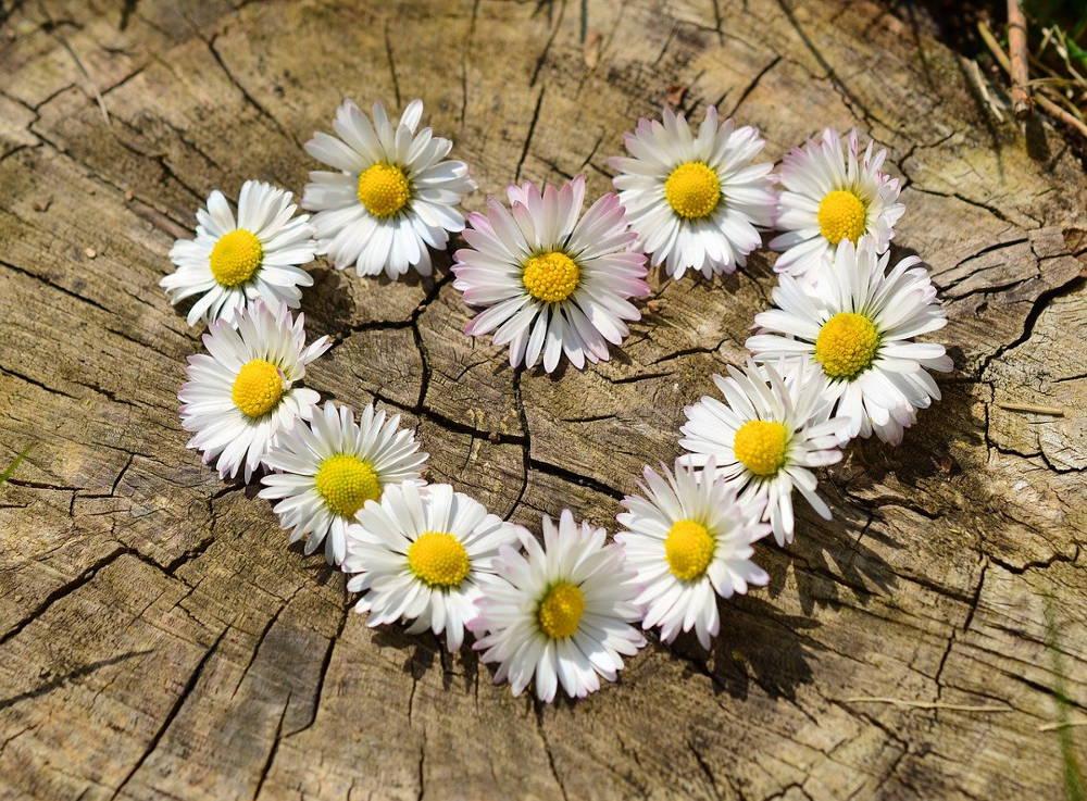 Jak wybrać kwiaciarnie online