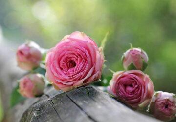 Ile kwiatów na przeprosiny