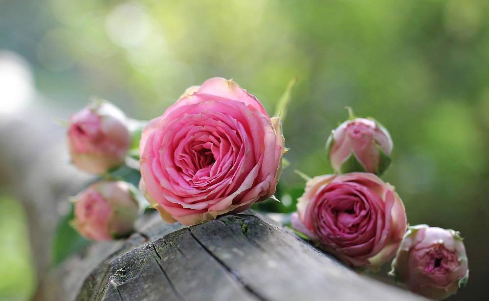 Ile Kwiatow Na Przeprosiny Kwiatkihonoratki Pl